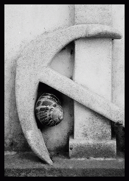 snail under the anchor